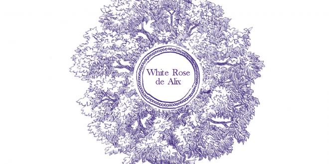 Geschenktipp: White Rose de Alix